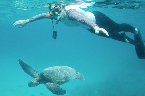 Calipso's 5-Day Itinerary Day Two - Snorkelling with Turtles.