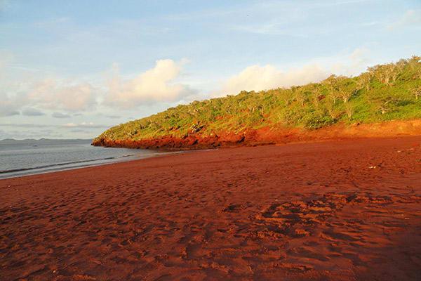 Nemo II's 8-Day Northern Itinerary Day Six - Rabida Island Shoreline.