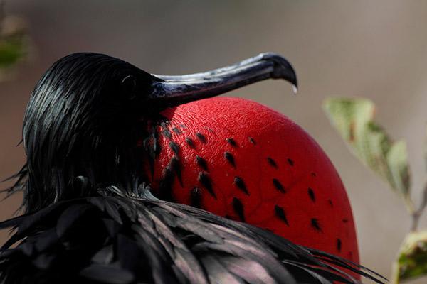 Camila's 4-Day Itinerary Day One - Frigate Bird Sighting.