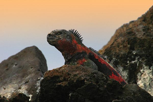 Camila's 8-Day Itinerary A Day Two - Marine Iguana.