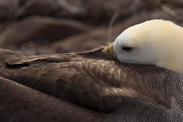 Camila's 8-Day Itinerary B Day Three - Galapagos Albatross.