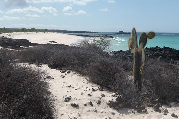 Camila's 8-Day Itinerary B Day Four - Bachas Beach Landscape.