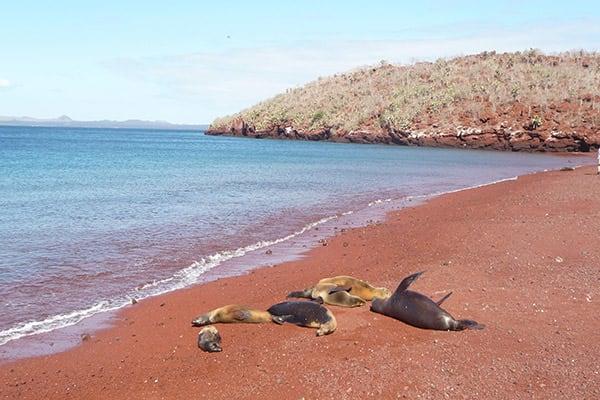 Camila's 8-Day Itinerary B Day Five - Rabida Island Beach.