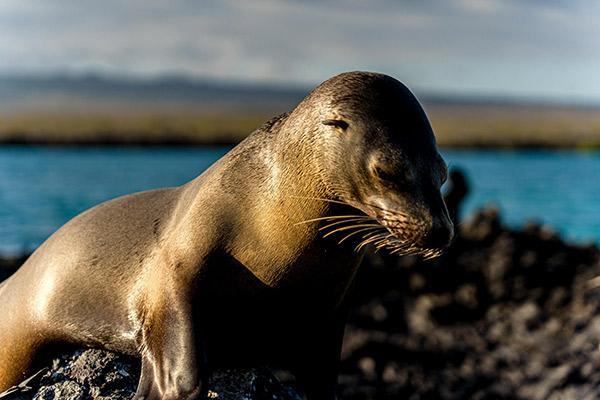 Camila's 8-Day Itinerary B Day Seven - Galapagos Sea Lion.