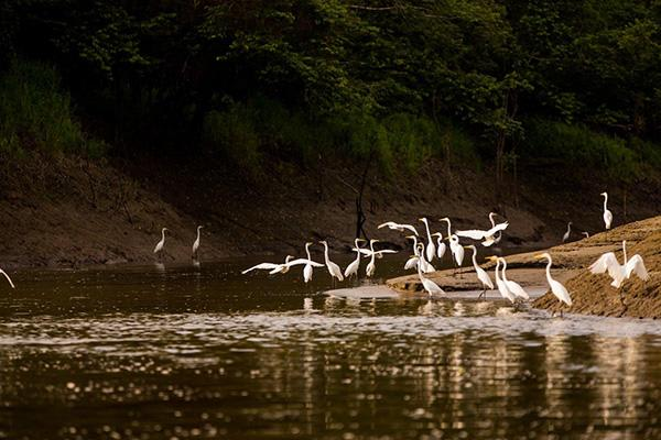 Agua Marina's 4-Day Bird Watching Itinerary Day Three - Bird Gathering.