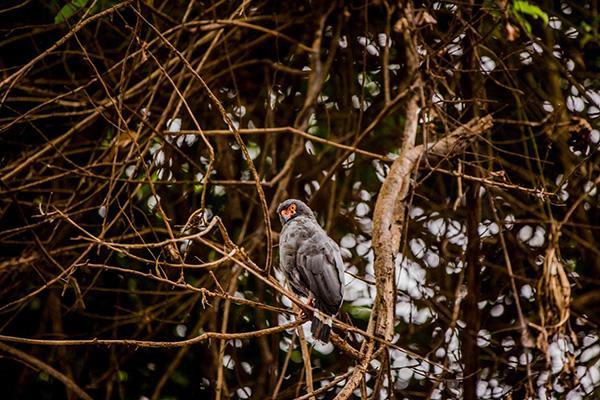 Agua Marina's 5-Day Itinerary Day Two - Bird Watching.