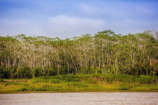 Agua Marina's 8-Day Itinerary Day Two - Amazon River Peru.