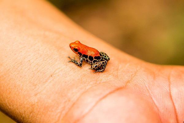 Agua Marina's 8-Day Itinerary Day Four - Amazon Frog.