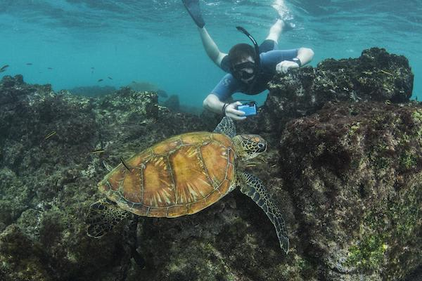 Treasure of the Galapagos 5-Day 'B' Itinerary Day Four - Snorkelling with Turtles.