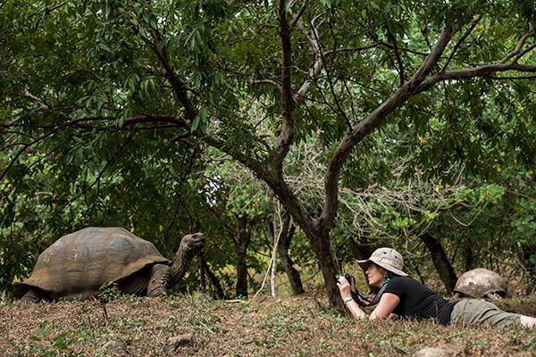Treasure of the Galapagos 7-Day 'C' Itinerary Day One - Galapagos Giant Tortoise.