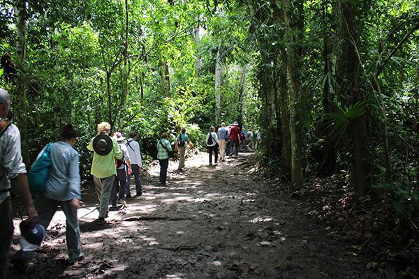 Spondias 7-Day Itinerary Day Six - Walking through the Jungle.