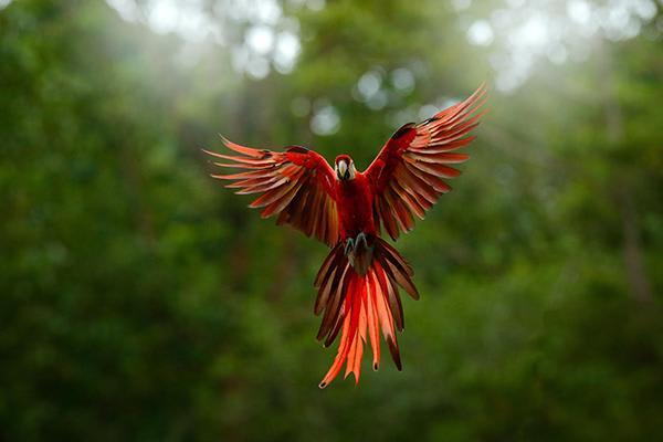 Spondias 8-Day Birdwatching Itinerary Day Three - Bird Photography.