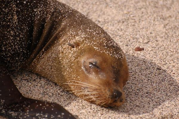 Elite's 8-Day Itinerary 'A' Day Five - Galapagos Sea Lion.