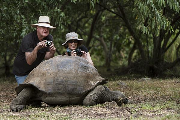 Elite's 8-Day Itinerary 'B' Day One - Galapagos Giant Tortoise Up Close.