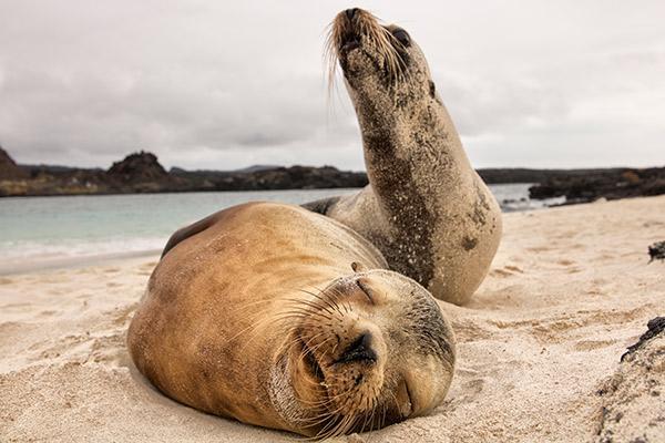 Stella Maris' 8-Day A Itinerary Day Three - Sea Lion Sleeping.