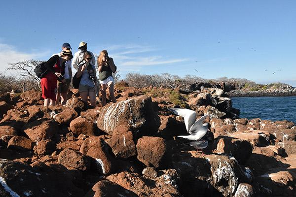 Endemic's 4-Day Itinerary Day Three - North Seymour Island Excursion.