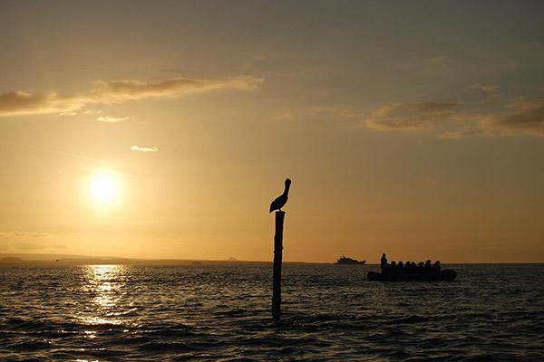 Endemic's 4-Day Itinerary Day Four - Pelican in the Sunset.