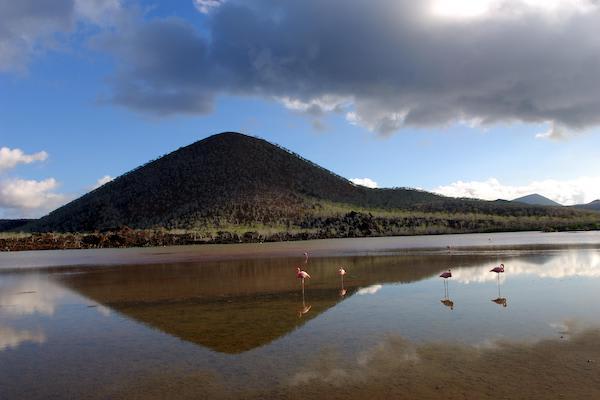 Endemic's 8-Day 'B' Itinerary Day Six - Flamingos at Floreana Island.