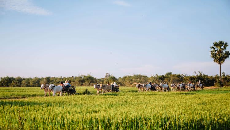 Jayavarman's Serenity Cruise Downstream Day Four - Excursion on Ox Carts