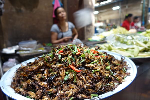 Jayavarman's The Lost Civilization Upstream Day Eight - Roasted Insects