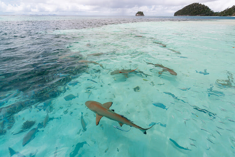 Aqua Blu's 13-Day Spice Island to Flores - Day Seven - Shark Sighting