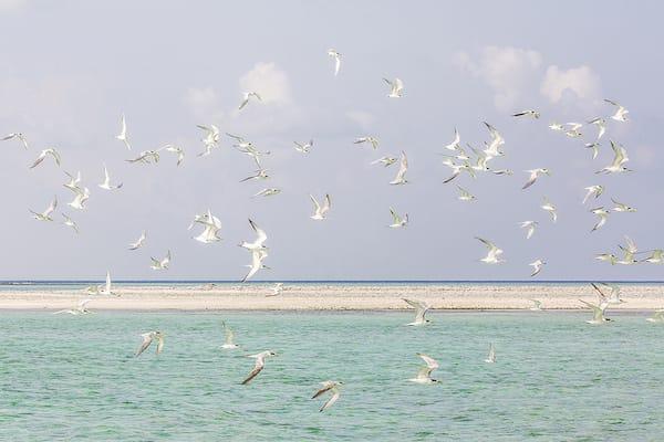 Aqua Blu's 13-Day Spice Island to Raja Ampat - Day Five - Sea Birds