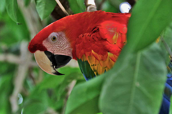 Jacaré-Tinga's 4-Day Apuaú Wild Rio Negro Cruise Day One - Parrot Sighting.