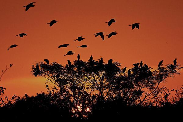 Jacaré-Tinga's 5-Day Jau National Park Cruise Day One -  Birds at Sunset.