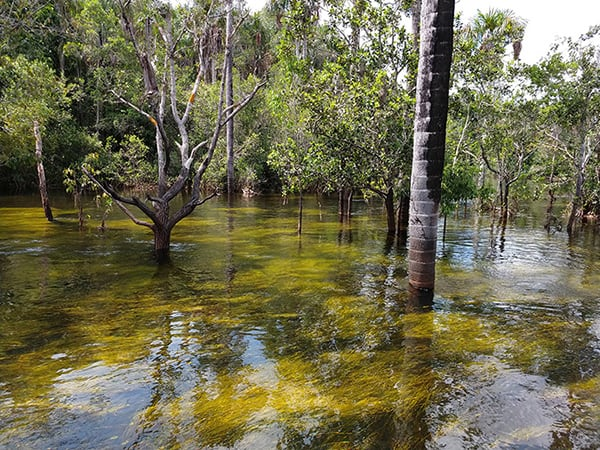 Jacaré Acu's 8-Day Cruise Day Five - Exploring the Flooded Forest.