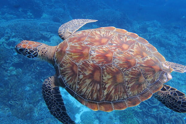 Ombak Putih's Sorong to Kaimana - Day Seven - Turtle