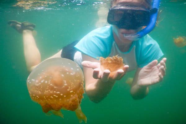 Katharina;s Jewels of Raja Ampat - Day Five - Snorkeling with Jellyfish