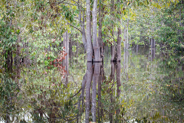 Rahai'i Pangun's 4-Day Relaxing Orangutan & Dayak Village Upriver - Day One - Cruising through Sekonyer River