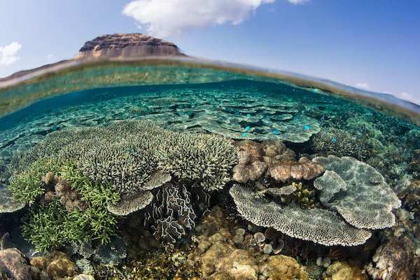 Sequoia's 5-Day Komodo Islands - Day Five - Amazing Corals View for Snorkeler