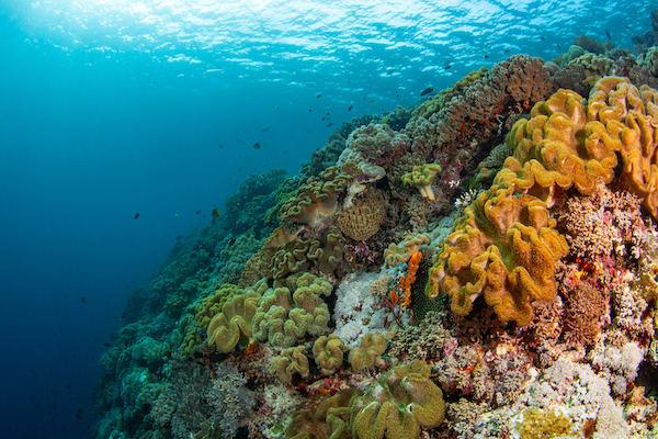 Tiare's 10-Day Komodo Islands - Day Three - Beautiful Corals