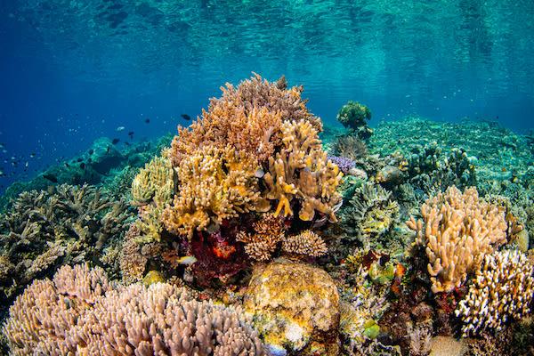 Tiare's 12-Day Maumere & The Forgotten Islands - Day Eleven - Beautiful Corals
