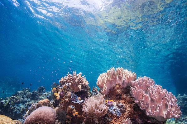 Tiare's 12-Day Raja Ampat - Day Three - Beautiful Corals