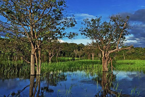 Amazon Odyssey's 3-Day Escape Cruise Day One - Amazon River.