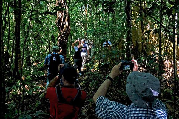 Amazon Odyssey's 4-Day Discovery Cruise Day Three - Jungle Trekking.