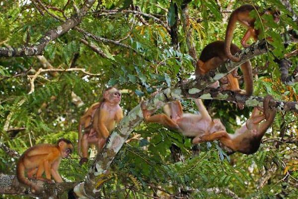 Amazon Odyssey's 5-Day Evasion Cruise Day One - Monkey Sighting.