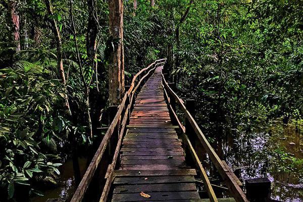 Amazon Odyssey's 5-Day Evasion Cruise Day Four - Jungle Trekking.