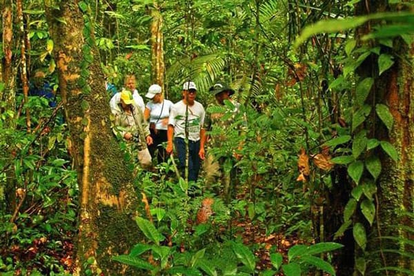 Amazon Odyssey's 6-Day Immersion Cruise Day Five - Jungle Tour.