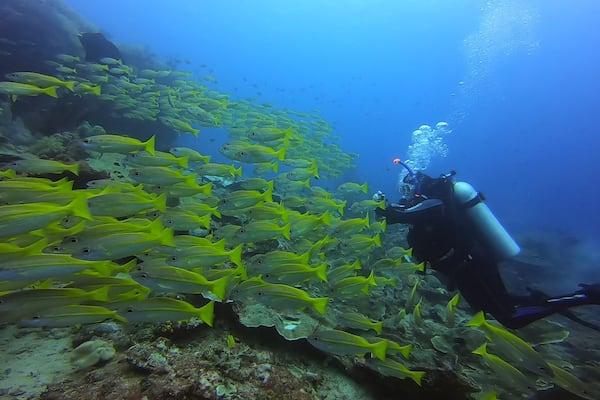Lady Denok's 10-Day Komodo Cruise - Day Three - Underwater