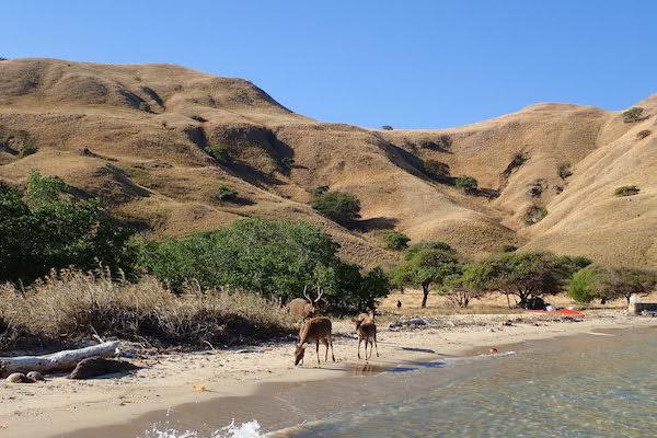 Lady Denok's 10-Day Komodo Cruise - Day Seven - Land Excursion