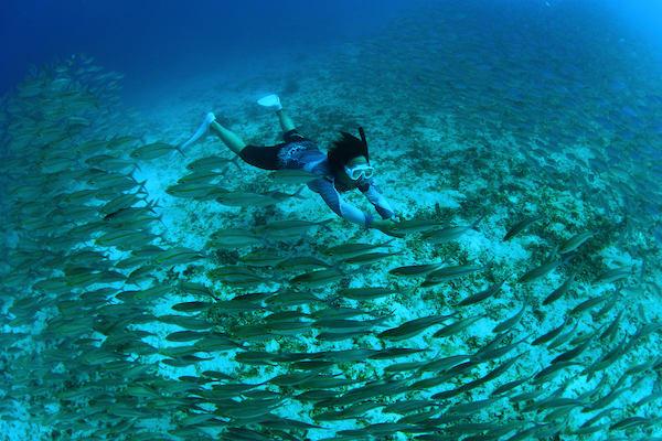 Lady Denok's 10-Day Komodo Cruise - Day Ten - Freedive