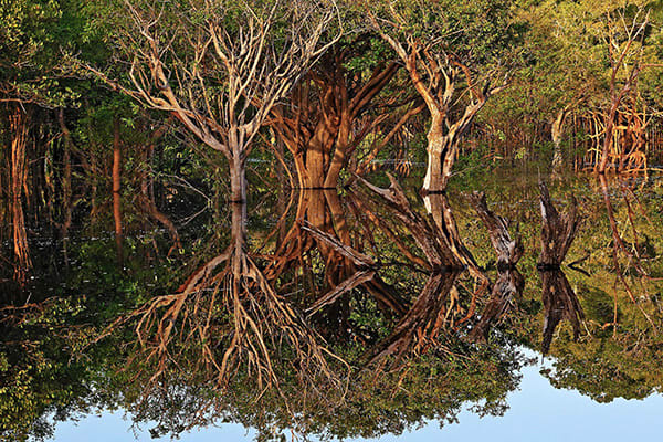 Iracema's 4-Day Charter Cruise Day Three - Amazon Rainforest.