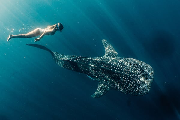 Tiger Blue's Komodo National Park - Day Three - Swimming with Whaleshark