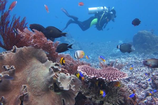 Tiger Blue's 8-Day Raja Ampat - Day Six - Diving in Raja Ampat