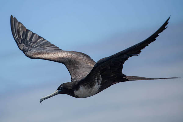 Senja's 11-Day Forgotten Island & Banda Sea Ring of Fire - Day Ten - Bird Watching