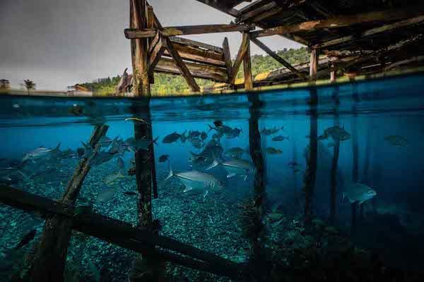 La Galigo's 6-Day Jurassic Komodo - Day Four - Underwater
