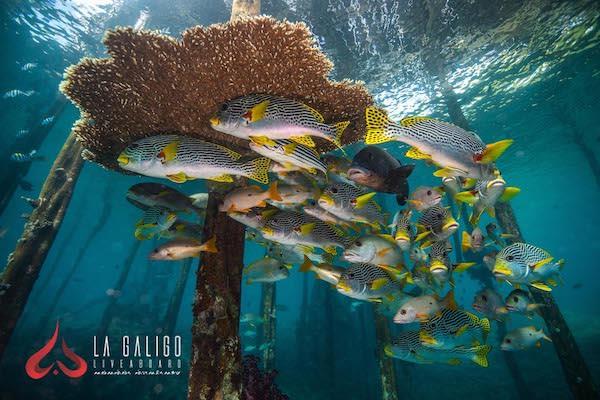 La Galigo's 8-Day Ultimate Komodo - Day Two - Underwater
